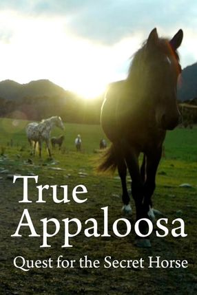 Poster: True Appaloosa