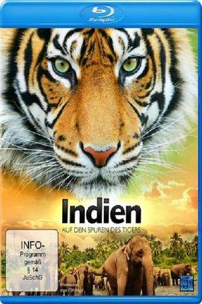 Poster: Indien - Auf den Spuren des Tigers