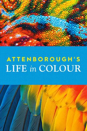 Poster: Das Leben in Farbe mit David Attenborough