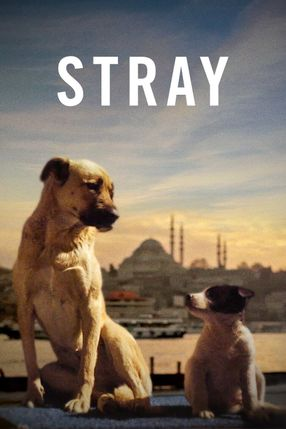 Poster: Stray