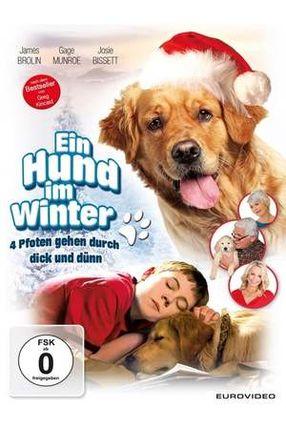 Poster: Ein Hund im Winter