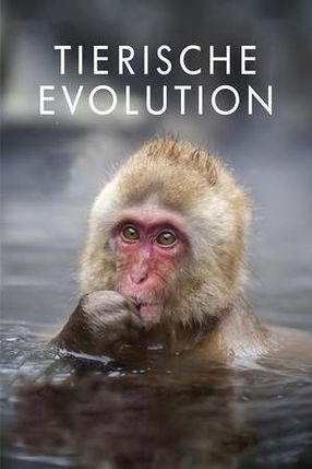 Poster: David Attenborough's Rise of Animals: Triumph of the Vertebrates