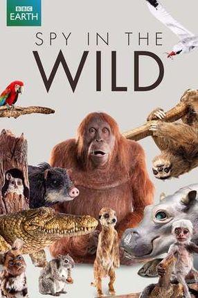 Poster: Spione im Tierreich